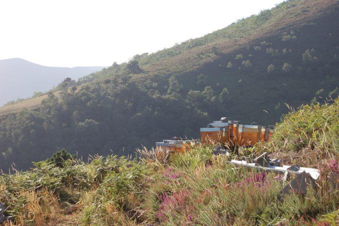 Bienestand in Asturien