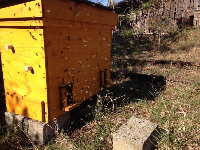 Bienen in der Einraumbeute