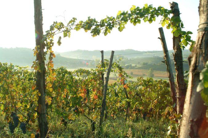 Weinberg Piemont