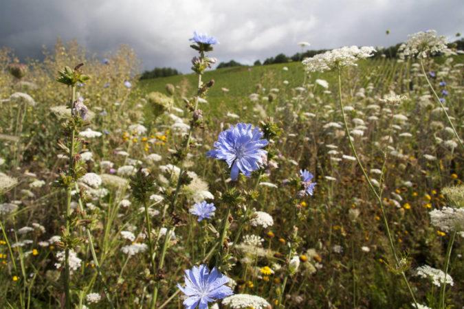 Biodiversität: eine blühende Wiese