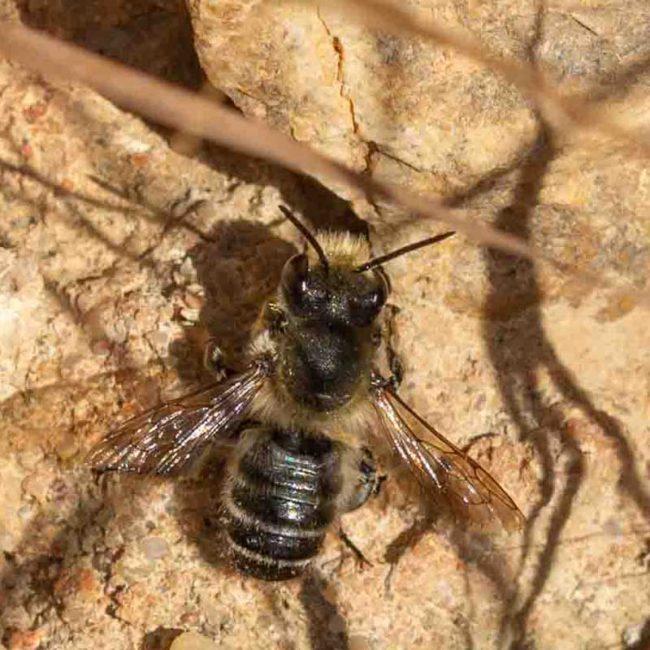 Krefelder Insektenstudie