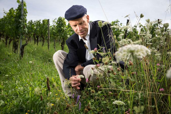 Karl Schefer im Weinberg eines Delinat-Winzers