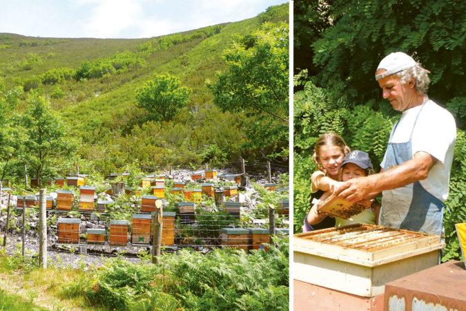 Imker Flavio Piovesan aus Italien besitzt 700 Bienenvölker und produziert klimaneutralen und biologischen Honig