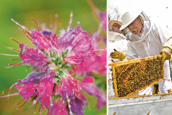 Christoph Gaupp (Imkerei Gaupp-Berghausen) aus Spanien verzichtet wie alle Delinat-Imker auf die Fütterung im Winter und lässt seinen Bienen genügend eigenen Honig