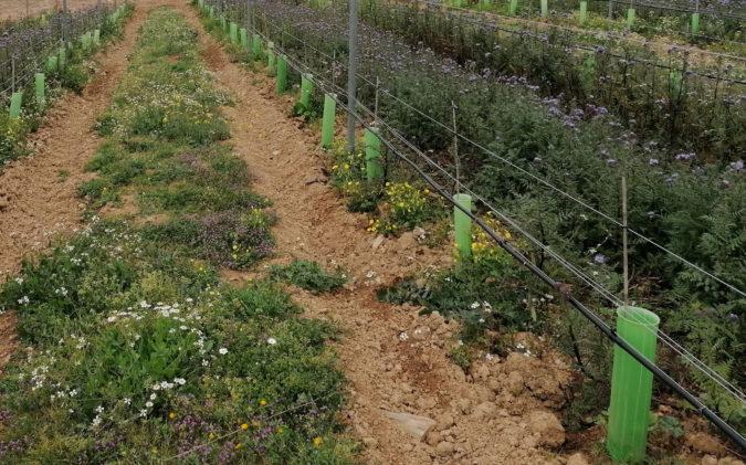 Keyline-System auf dem Weingut Vale de Camelos