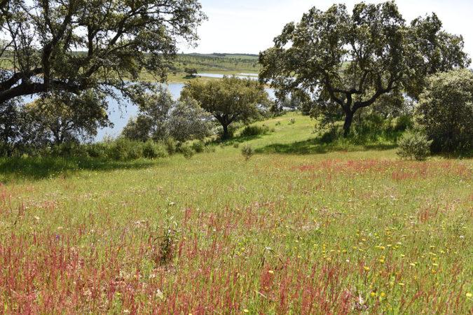Biodiversität auf dem Weingut Vale de Camelos