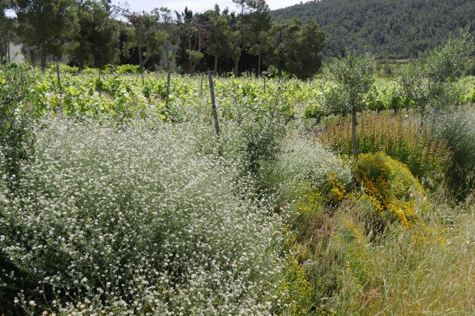 Üppige Vegetation dank Permakultur-Massnahmen
