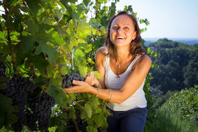 Auf der Azienda Poggio Ridente startet bald die Ernte der roten Trauben