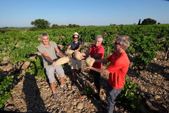 Die grossen, runden Kieselsteine (galets roulés) sind ein Markenzeichen von in den Weinbergen von Châteauneuf-du-Pape.