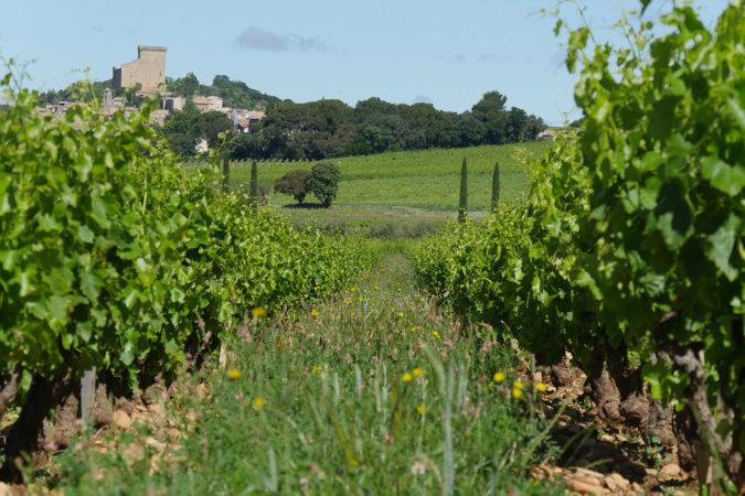 Auf der Domaine de Beaurenard sind sämtliche Bodenarten und Traubensorten zu finden.