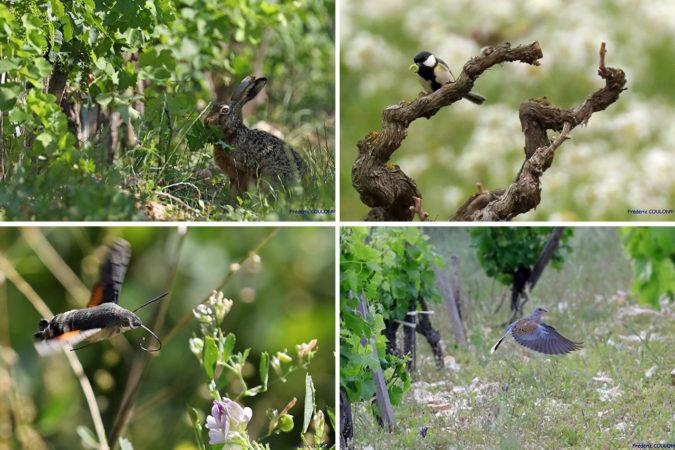 Eine reiche Tier- und Pflanzenwelt gehört neben den steinigen Böden zum Markenzeichen der Weinberge von Beaurenard.