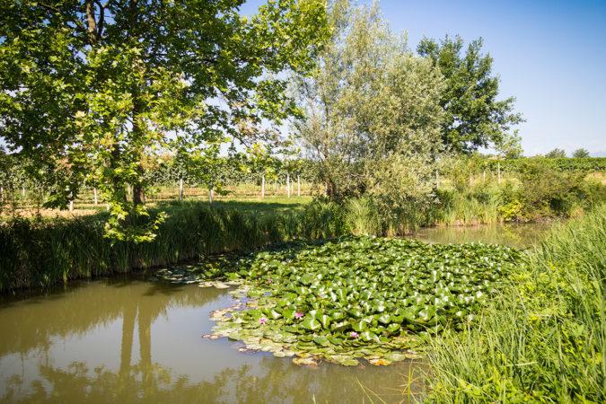 Wasser-Management hat in der Permakultur einen hohen Stellenwert: Das Regenwasser wird während den regnerischen Monaten gesammelt und vermindert im Sommer den Trockenstress der Reben.