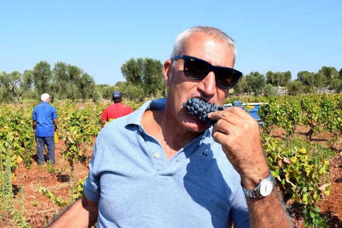Salvatore Meros Primitivo-Weine stehen für eine neue Qualität aus Apulien.
